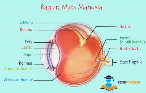 Bagian Mata Manusia