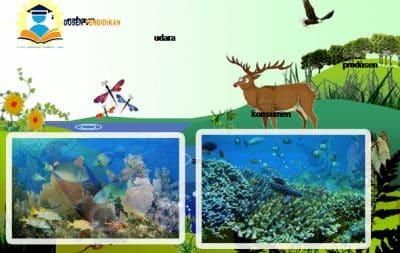 Ekosistem Adalah Pengertian Macam Komponen Gambar Contoh