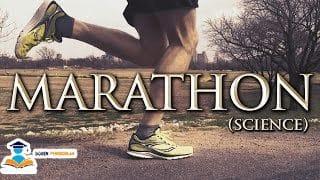 4 Macam Olahraga Lari Dan Tahapan Lengkap Pelaksanaanya