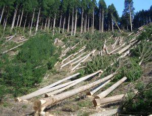 Dampak-Negatif-Penggundulan-Hutan-Secara-Liar-ilegal-loging