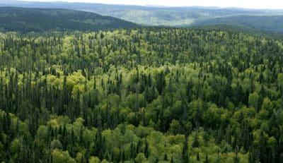 Pengertian, Proses Terjadinya Dan Macam Jenis Hutan Di Indonesia