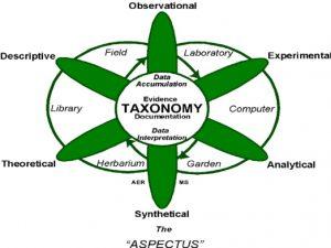 taksonomi-tumbuhan