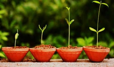pertumbuhan-tumbuhan