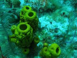 67 Koleksi Contoh Hewan Porifera Beserta Gambar Gratis