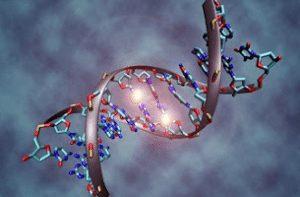 DNA-Dan-RNA