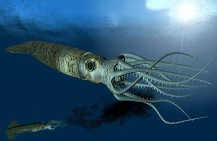 Mollusca-Adalah