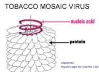 mosaic virus