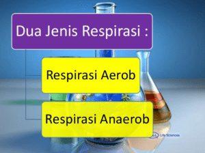 Respirasi-Anaerob-dan-Aerob