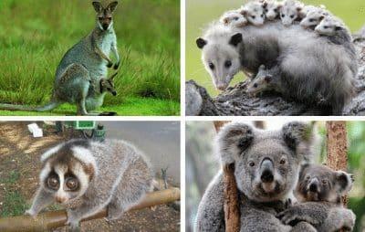 mamalia-adalah