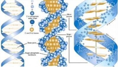 DNA-Adalah