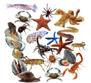 Hewan-Invertebrata