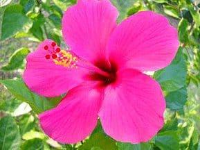 Bunga Lengkap
