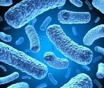 Ciri-Ciri-Bakteri
