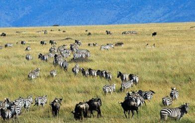 Ekosistem-Darat
