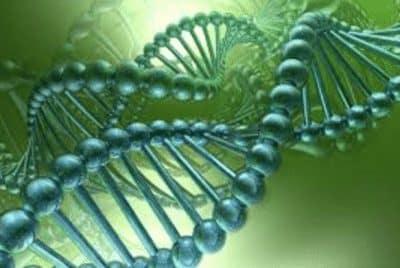 genetika-adalah