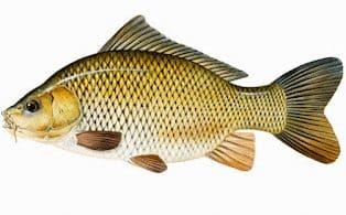 Ciri-Ciri Dan Peranan Pisces ( Ikan ) Beserta Penjelasannya