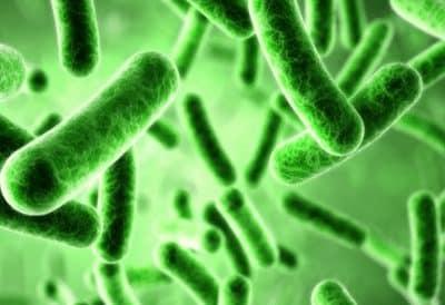 bakteri-yang-menguntungkan