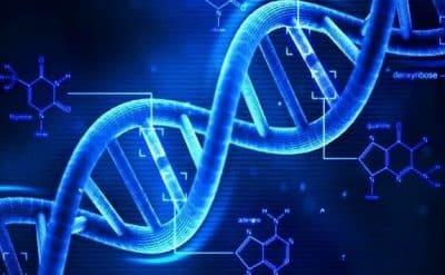 Letak Serta Fungsi Gen Pada Suatu Organisme