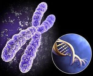 Jumlah Kromosom Pada Manusia