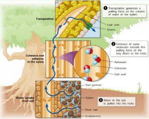 pengangkutan-tumbuhan