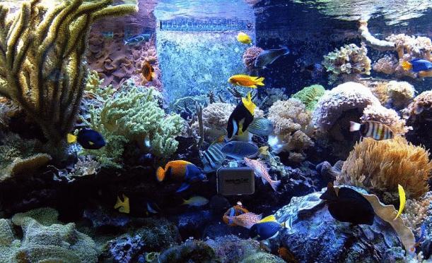 Penjelasan Jenis Ikan Hias Air Laut Dalam Biologi