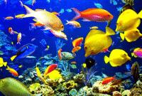 Fase-Pertumbuhan-Ikan