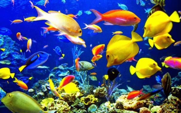 Fase Pertumbuhan Ikan Beserta Penjelasannya