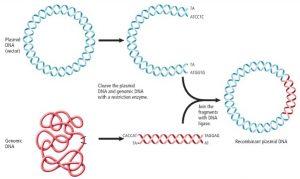 Plasmid Adalah