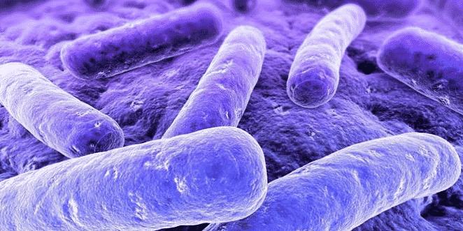 Penjelasan Habitat Bakteri Beserta Alat Geraknya