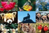 flora-dan-fauna