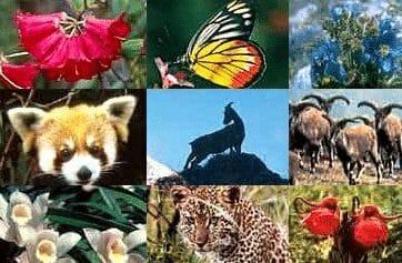 """""""Flora Dan Fauna"""" Pengertian & ( Persebaran - Upaya Melestarikan )"""