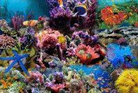 biota-laut