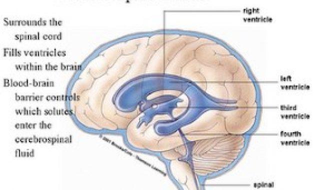 Aliran-Cairan-Serebrospinal