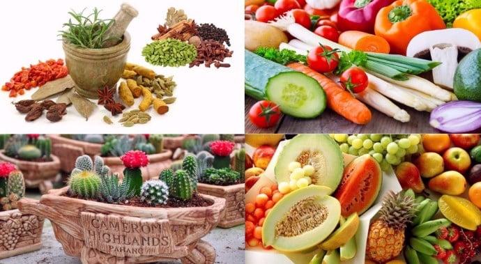 tanaman-hortikultura