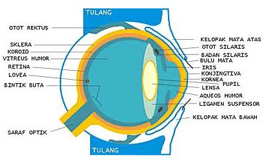 Bagian-Bagian-Mata