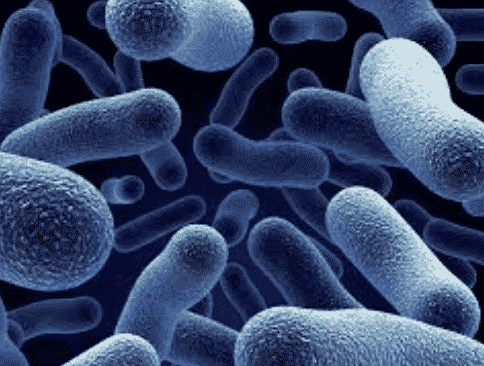 Bakteri Aerob