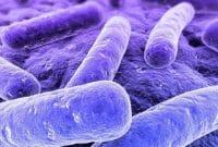 Bakteri Psikrofil