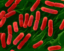 Bakteri Termofil