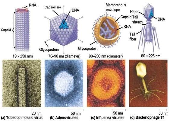 Beberapa-ukuran-virus