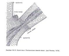 Daerah-Absisi