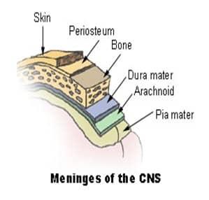 Gambar CNS