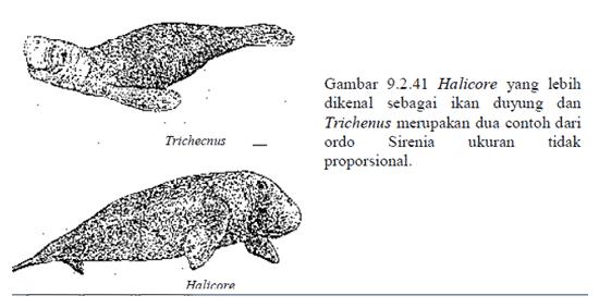 Ikan duyung
