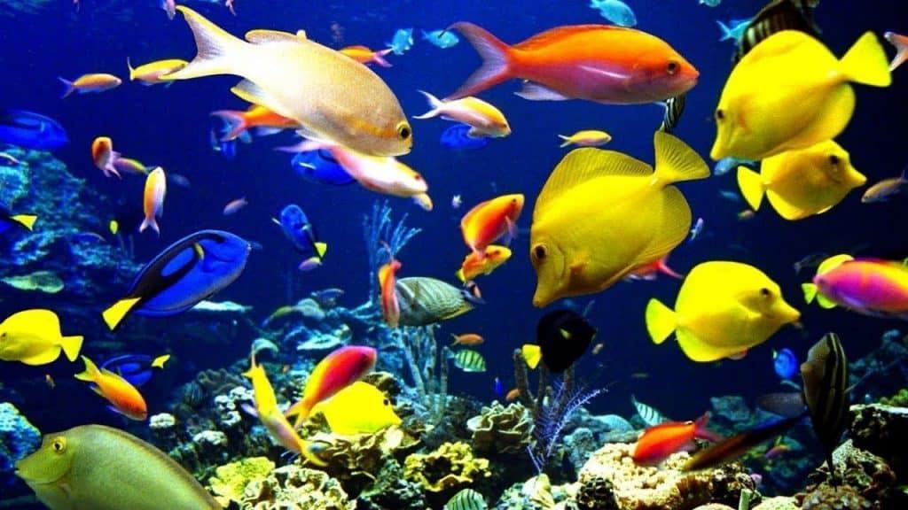 Contoh Sumber Daya Laut Jenis Pemanfaatan Ancaman Upaya