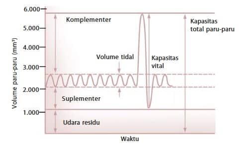 Jenis Volume Udara Pernapasan