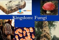 Kingdom-Fungi-Klasifikasi-Jamur