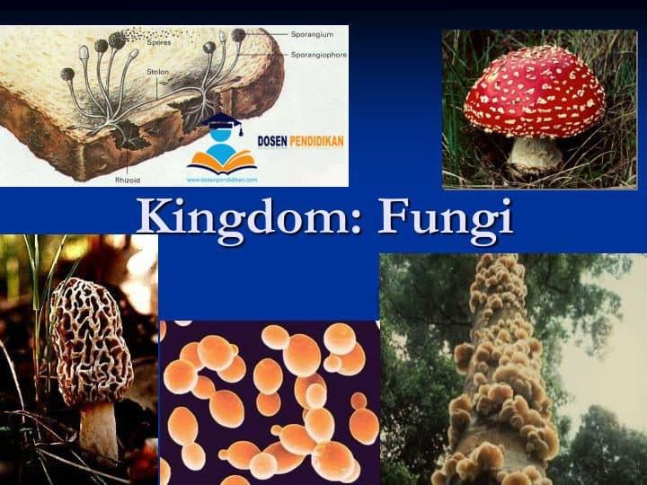 Kingdom Fungi (Jamur) - Pengertian, Ciri, Struktur dan Klasifikasi