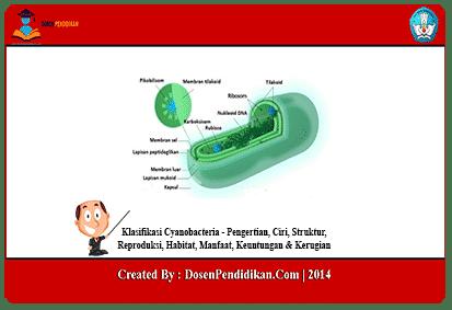 Klasifikasi-Cyanobacteria