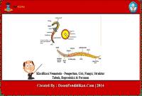 Klasifikasi-Nematoda