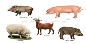 Klasifikasi Ordo Artidoctyla