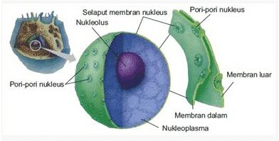 Membran Inti